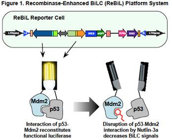 Figure 1. ReBil Platform System